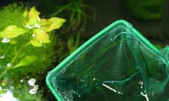 Акваріум: як почистити підводний світ в домашніх умовах