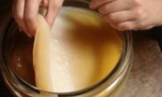Чайний гриб: як доглядати, де взяти, як пити?