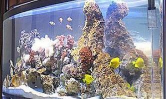 Чорна цвіль в акваріумі - як боротися