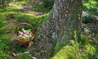 Де потрібно шукати гриби в лісі