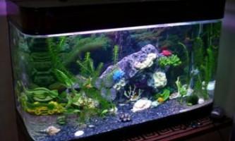 Грунт для акваріума - рекомендації по вибору і застосуванню