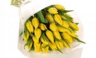 Як зберігати тюльпани: продовжуємо життя зрізаних квітів