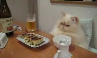 Як годувати і напувати кішку і собаку, коли господар у від`їзді - корисні поради від видання «вм»