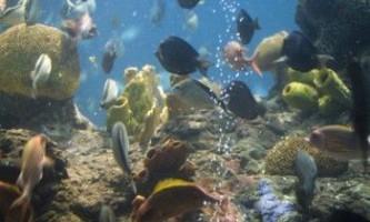 Як нагріти воду в акваріумі?