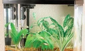 Як очистити акваріум від вапняного нальоту?