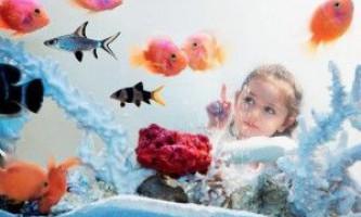 Як очистити воду в акваріумі