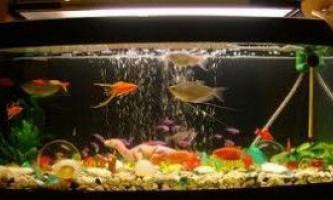 Як організувати життя рибкам