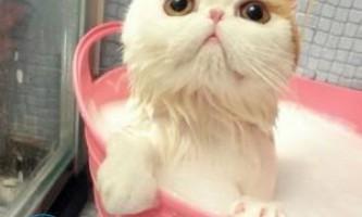 Як помити кота якщо він боїться води і дряпається?