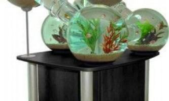 Як правильно оформити акваріум