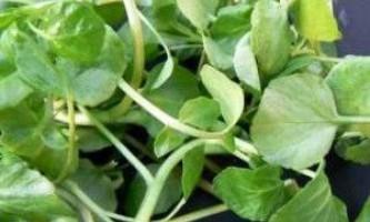 Як правильно виростити самі ранні овочі на своєму городі на дачі?