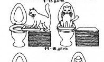 Як привчити кота до унітазу? Легко і просто, хоча і довго.