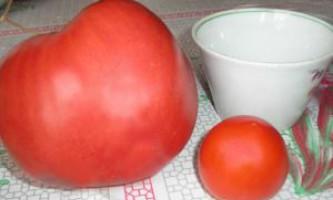 Як садити помідори насінням, розсадою