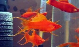 Як знизити температуру води в акваріумі?