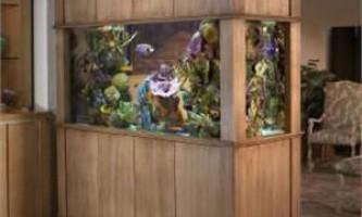 Як прибрати запах з акваріума