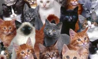 Як вибрати кішку - критерії вибору тваринного