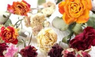 Як засушити троянду в домашніх умовах?
