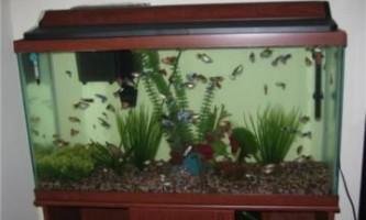 Яких рибок можна містити в невеликому акваріумі - рекомендації від видання «вм»