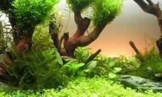 Чому на стінках акваріума з`являється зелень?