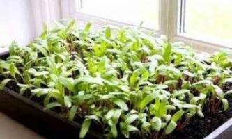 Підготовка насіння овочевих культур до посіву: способи