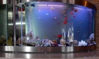 Підготовка води для акваріумних рибок - поради від видання «вм»