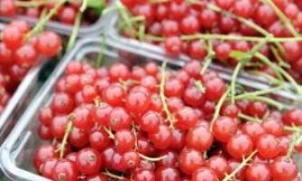 Корисні властивості червоної смородини