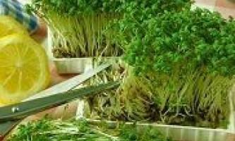 Корисні властивості крес салату