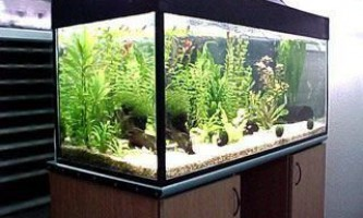 Правила освітлення акваріума - рекомендації від видання «вм»
