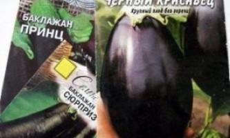 Вирощування баклажанів в відкритому грунті, теплиці з насіння