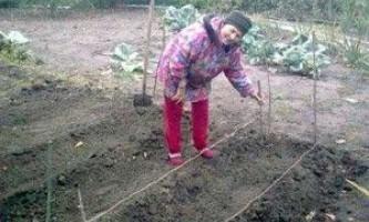 Вирощування овочів у відкритому грунті на дачі на грядках